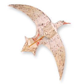 Cerf-volant La Mouette